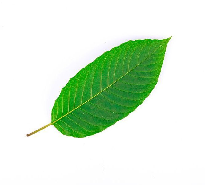 Kratom For Anxiousness Designed To Be Damaged